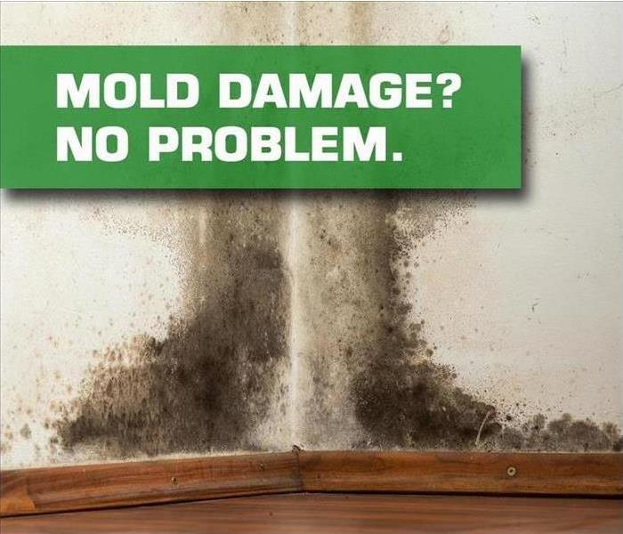 Mold Remediation Mold: A HOT topic.