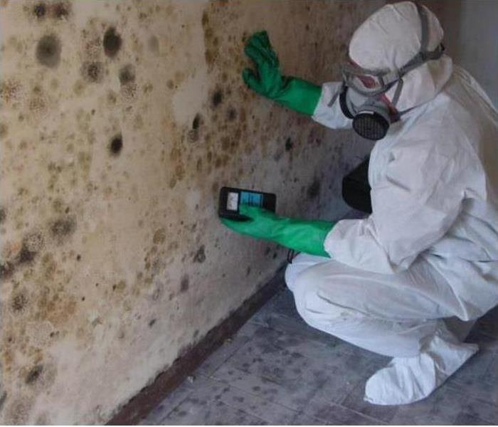 Mold Remediation SERVPRO: NYS Mold